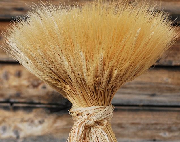 Sheaves of Demeter Coven